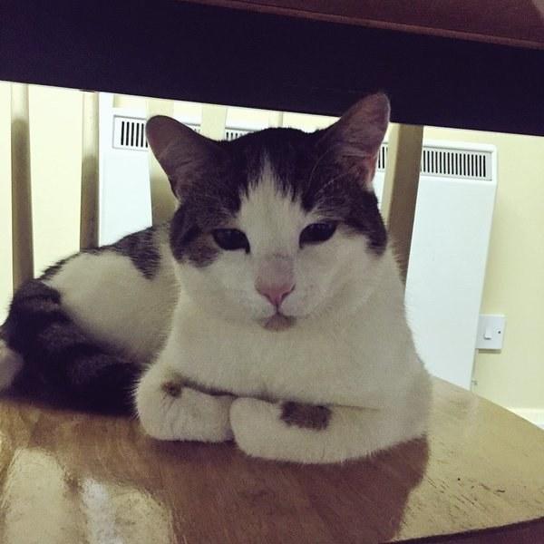 gatito que luce con la carita adorable
