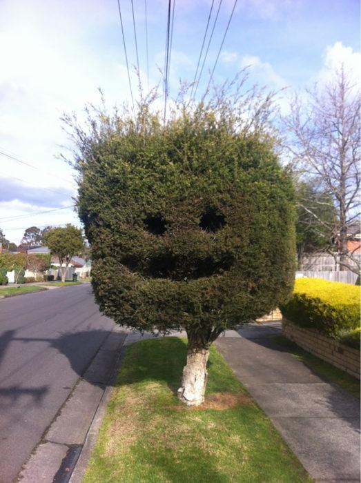 árbol sonriendo