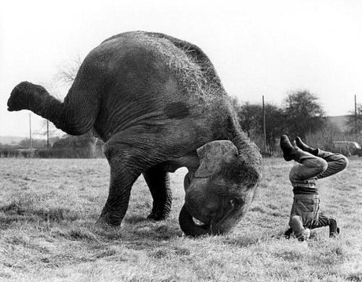elefante haciendo yoga