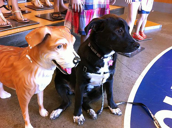 perro junto a un maniquí de perro