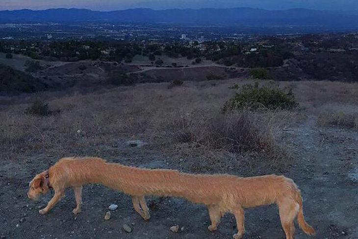 perro largo y con 8 patas