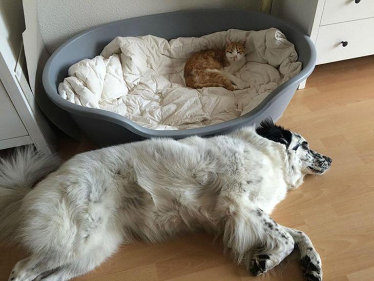 perro blanco dormido