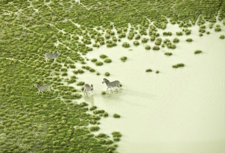 paisaje y cebras