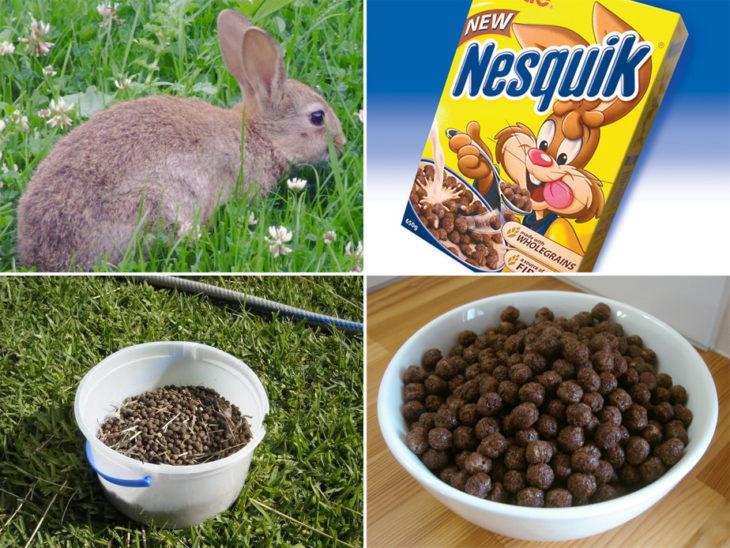 conejo y popo de conejo y nesquik