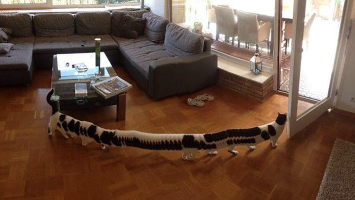 gato con 16 patas y largo debido a panorámica fallida