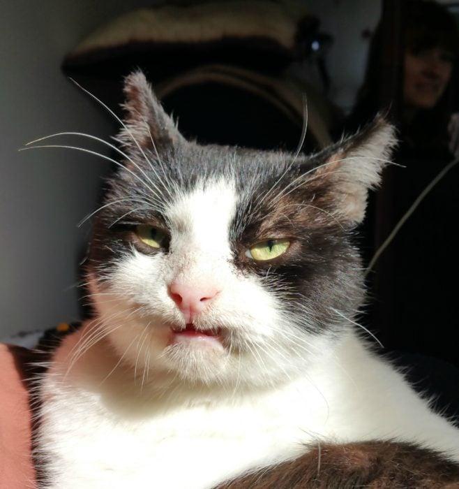 gato con cara rara
