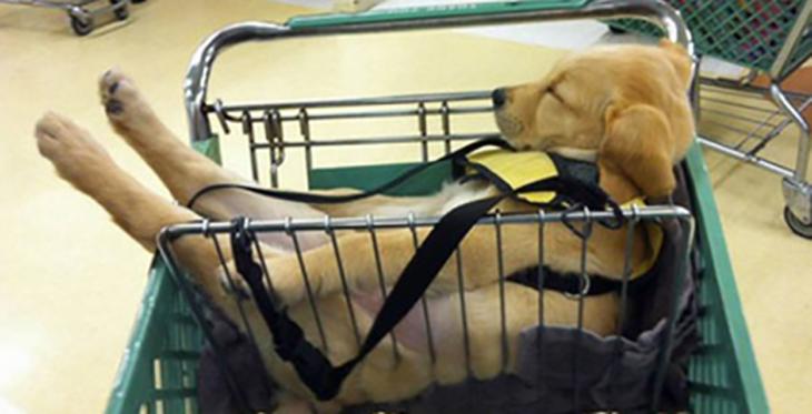 cachorro durmiendo en carrito de compras