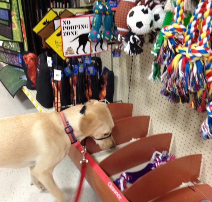 perrito en una tienda de mascotas