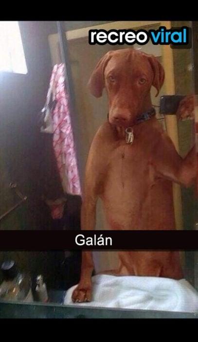 perro tomándose una foto