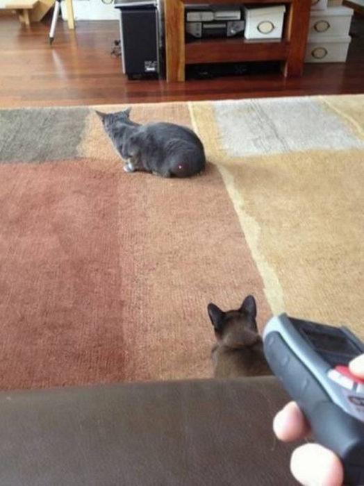 gato con luz lazer