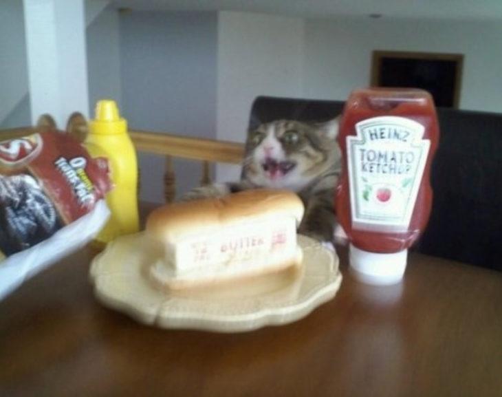 gato frente a salchichas