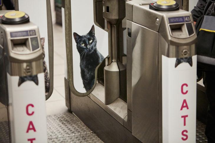 gatos estampas en tren