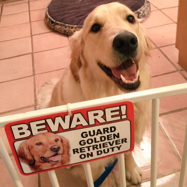 perro adulto cuidado con el perro