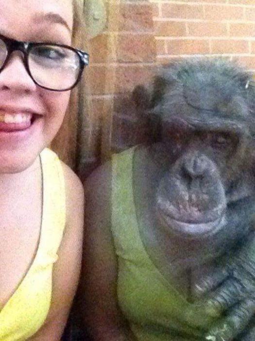 se refleja ropa de mujer en un primate