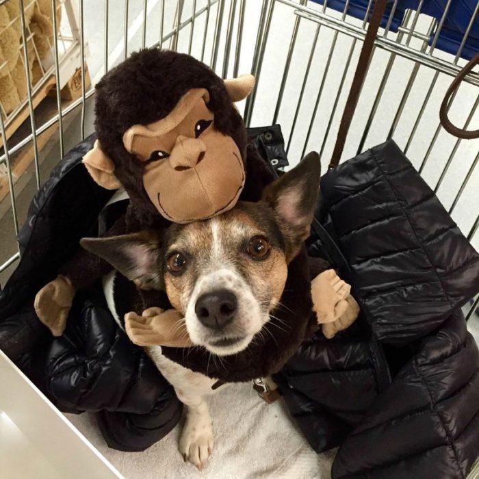 cachorro abrazado de un simio de peluche