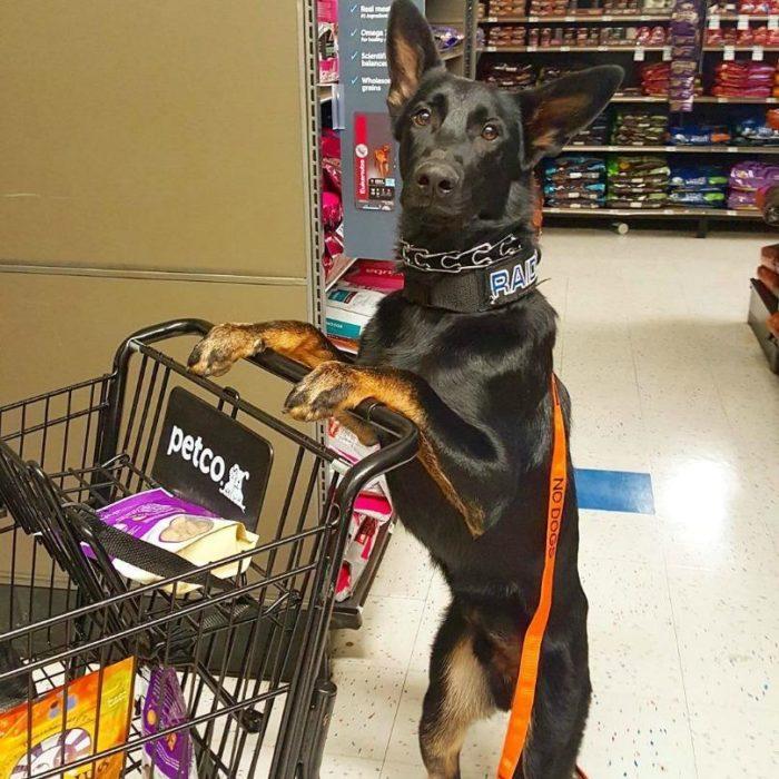 perro empujando carrito de compras