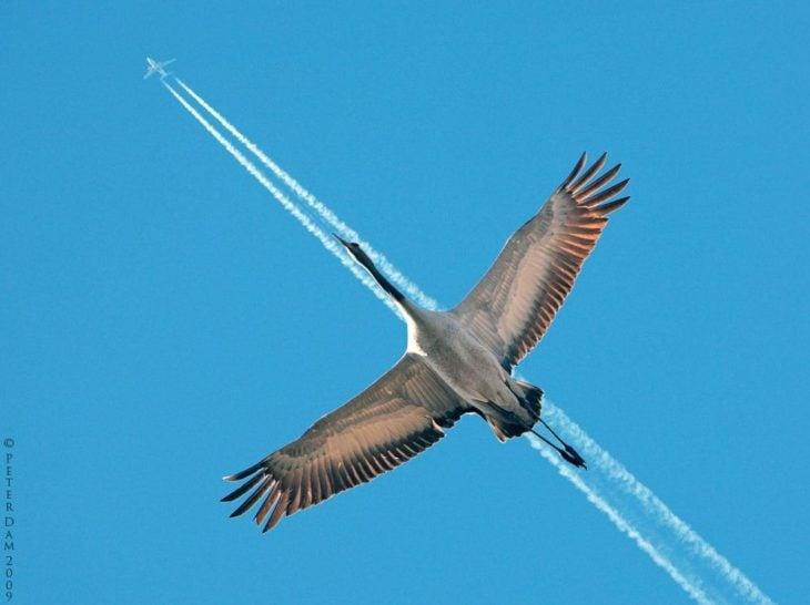 ave vuela debajo de marcas de avión