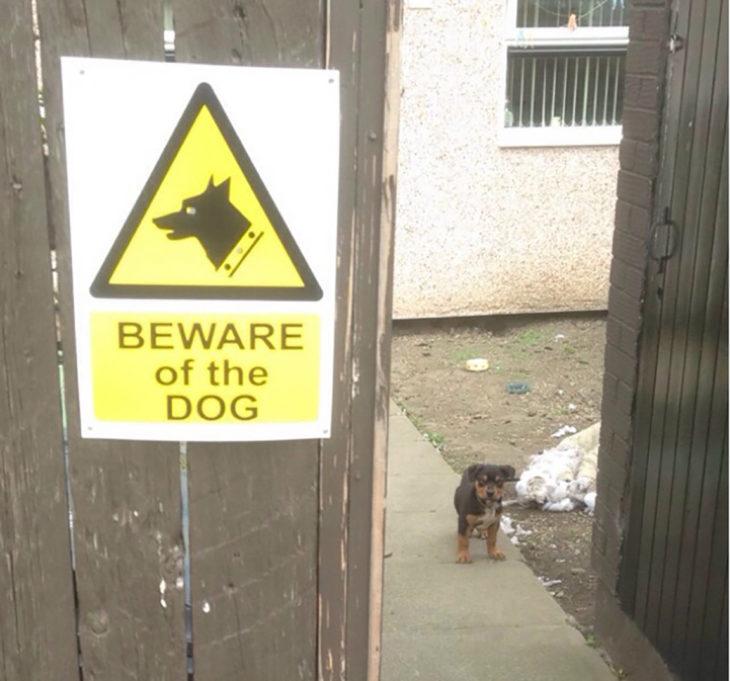 cuidado con el perro, perro enano