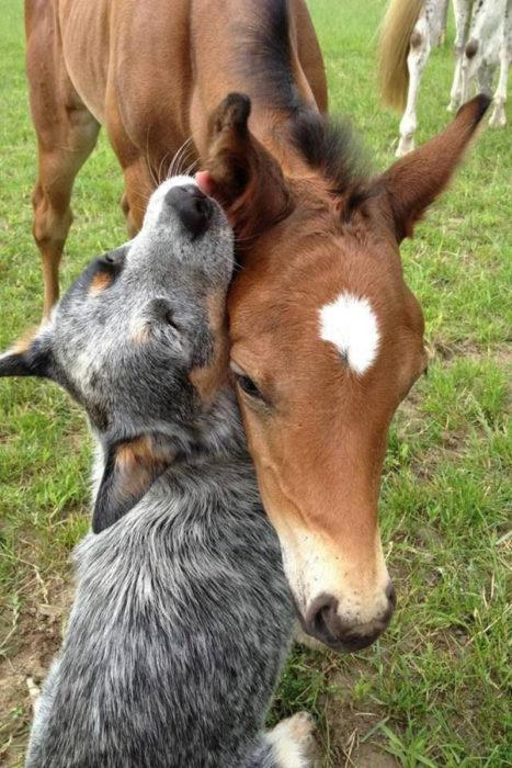 perro y caballo son amigos