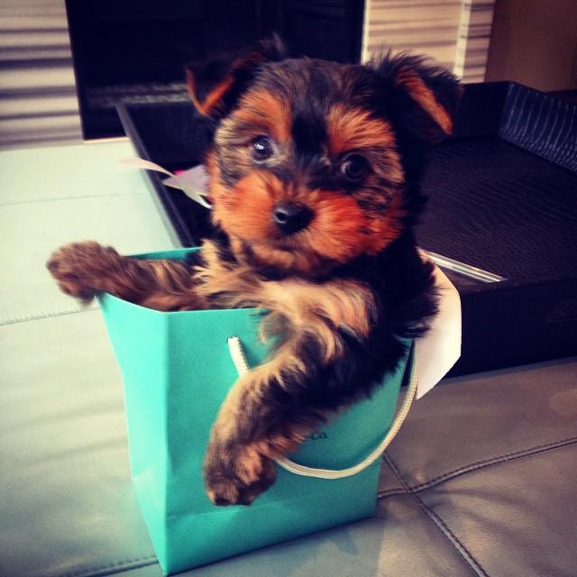 perrito dentro de bolsa de compras