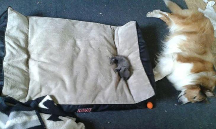 gatito diminuto y perro dormidos
