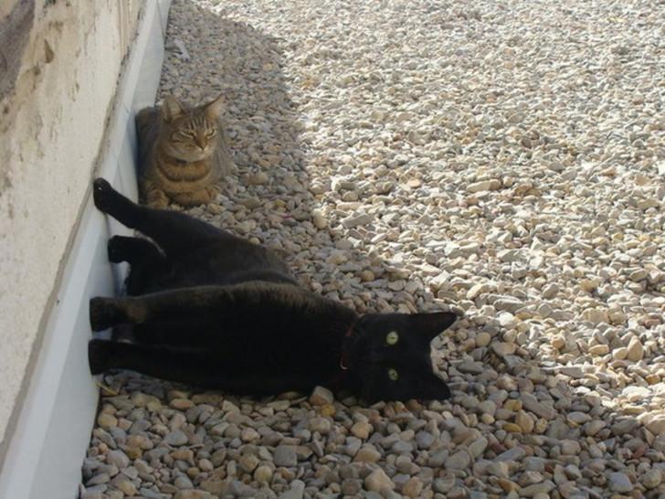 gato gravedad