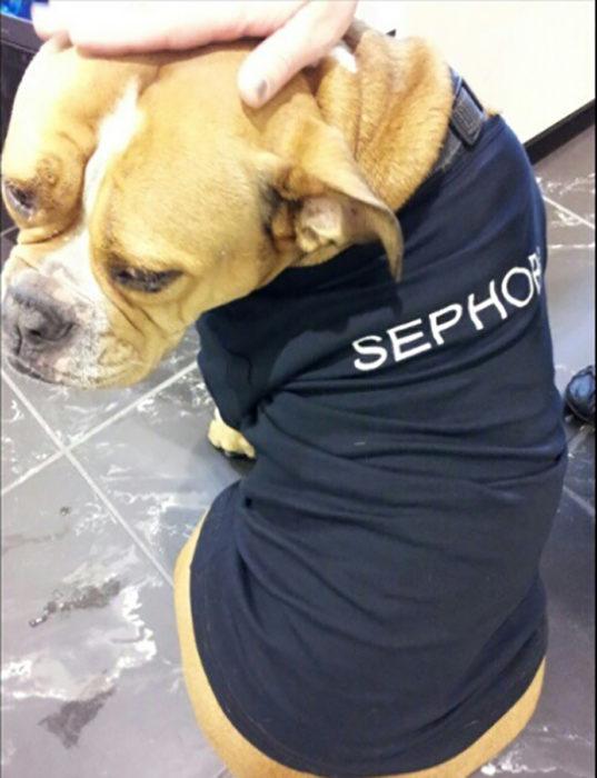 perro con camiseta de sephora