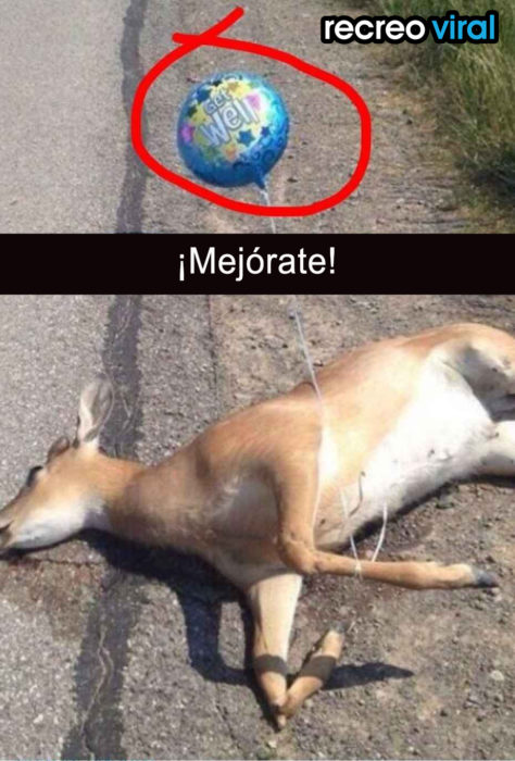 ciervo muerto