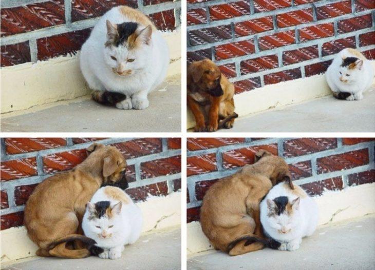 gato y perro abrazados