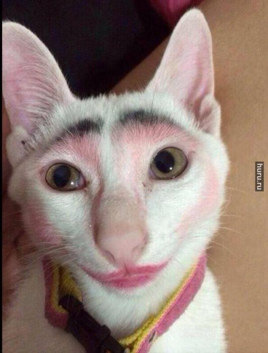 gato con cejas