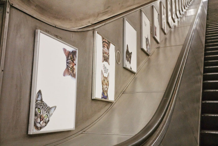 fotos de gatos en pared