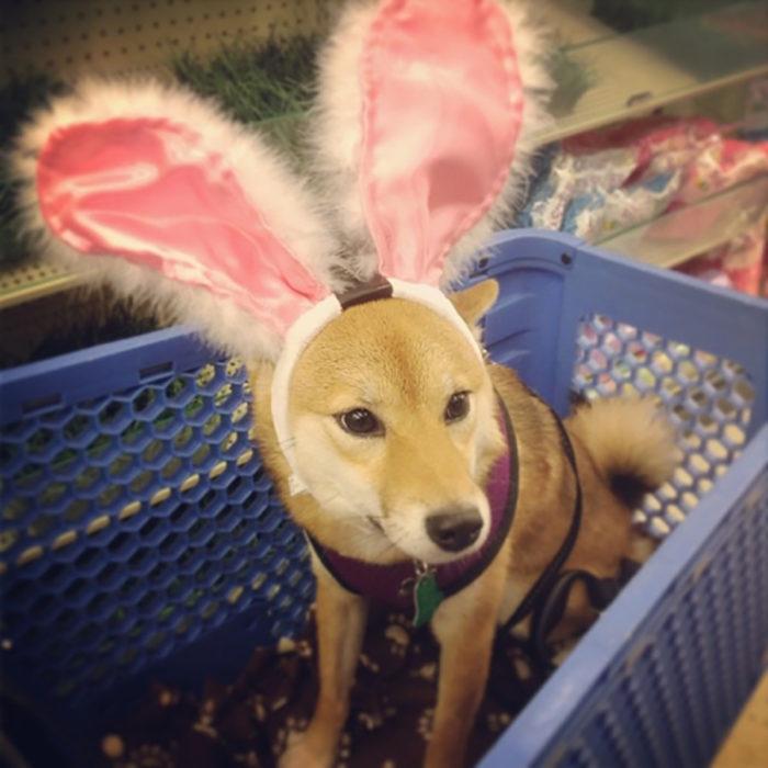 perro con orejas de conejo
