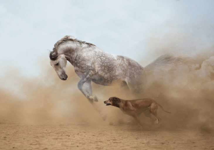 caballo y perro corriendo juntos