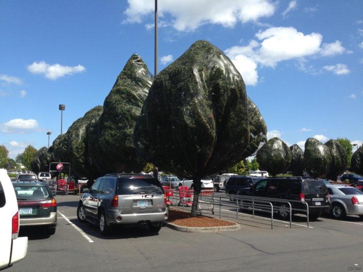 árboles dentro de bolsas