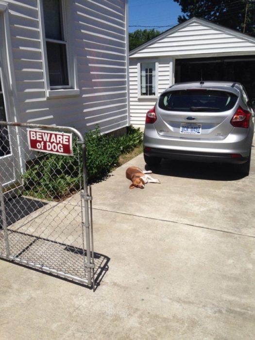 perro acostado en cochera