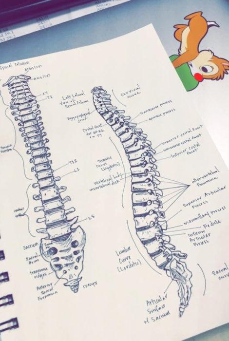 dibujo de espina dorsal