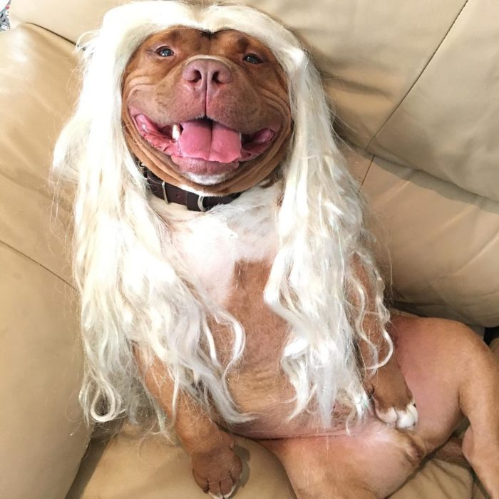 perrito con peluca