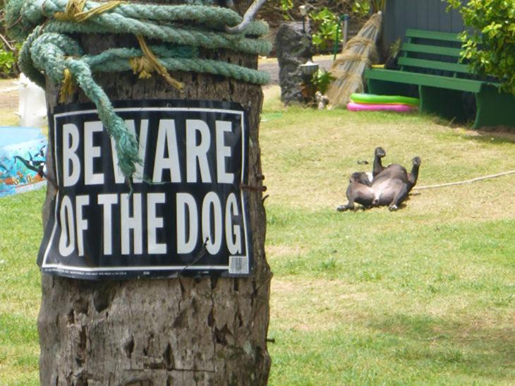perro de panza