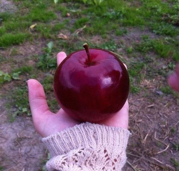 manzana perfectamente redondita