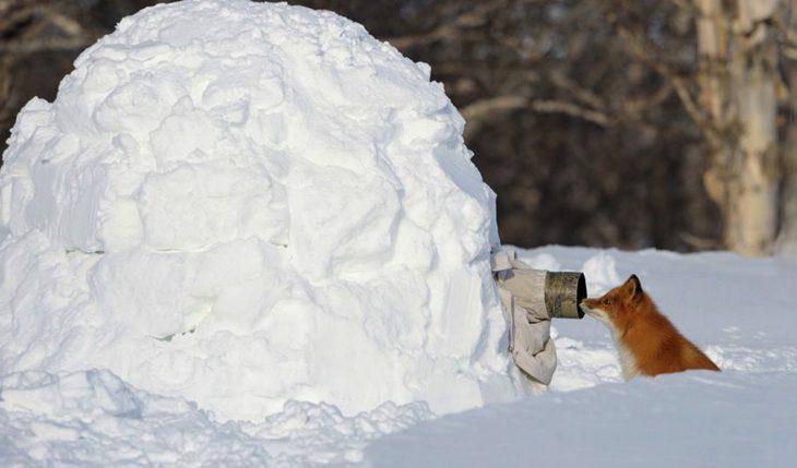 fotógrafo dentro de una bola de nieve