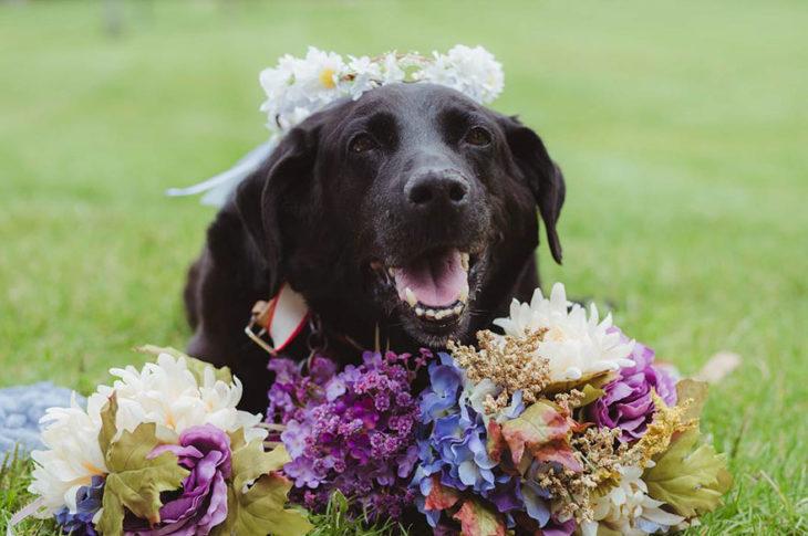 labrador negro adornado con flores