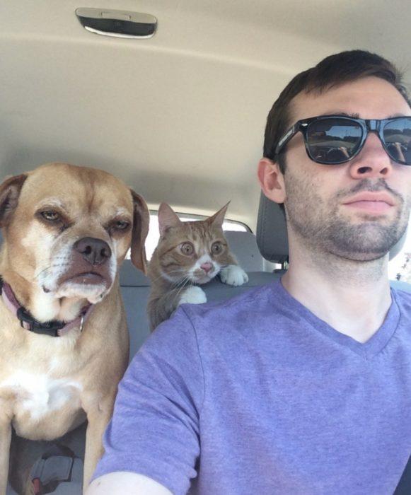 perro gato y humano viajando