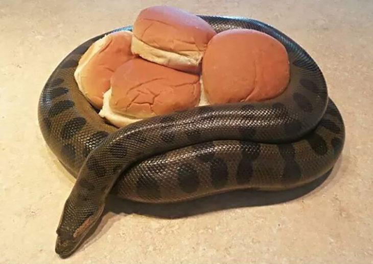 serpiente alrededor de panes