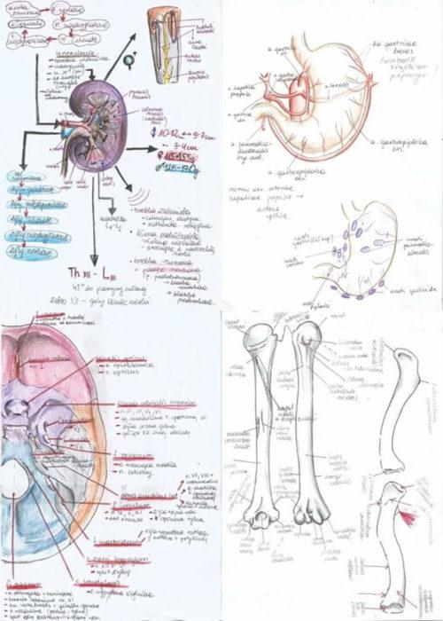 dibujos de anatomía
