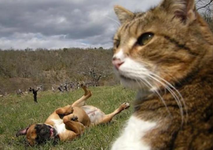 Animales photobomb - Foto de un perro atrás acostado y divirtiéndose y en el primer plano esta un gato con cara de fastidio