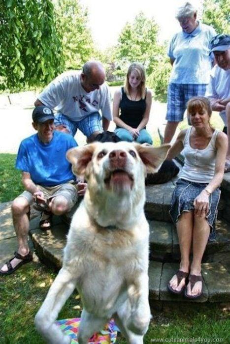 Animales photobomb - perro atravesandose en las fotos
