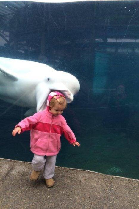 Animales photobomb - Niña en un acuario y delfin atrás