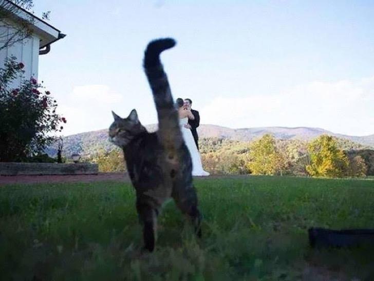 Animales photobomb - Foto de una pareja recien casada atras y un gato aparece y muestra su trasero