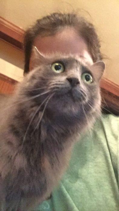 Foto de una persona queriendo tomarse una selfie pero su gato se pone en medio