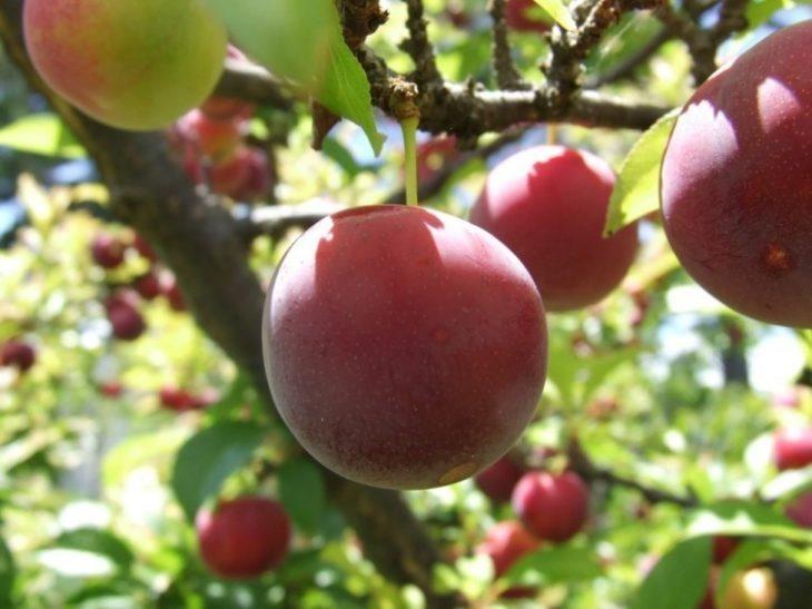 ¿Un árbol que da 40 frutos distintos? Increíble pero cierto!